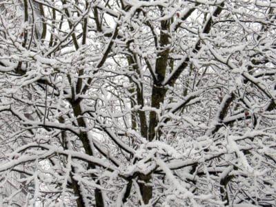 프 로스트, 나무, 생태, 겨울, 자연, 지, 감기, 눈, 숲
