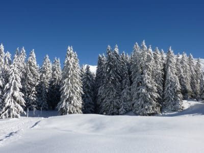 snow, winter, cold, hill, conifer, blue sky, frost, wood, frozen, ice, mountain