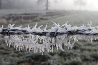 frost, barbed wire, nature, winter, frozen, ice, crystal, grass