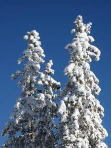 colina, cielo azul, nieve, conífera, clima, invierno, helada, árbol, congelado, bosque