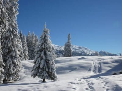 snow, winter, cold, hill, conifer, blue sky, frost, wood, ice, mountain, frozen