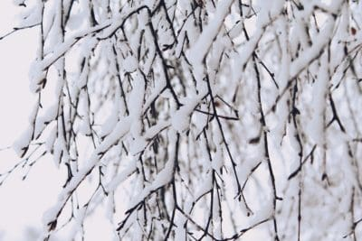 snowflake, winter, nature, tree, snow, cold, abstract, frost, branch