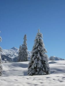 snow, winter, cold, frost, hill, conifer, blue sky, ice, mountain, tree, forest