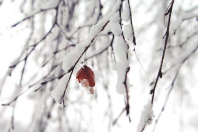 flocon de neige, hiver, givre, neige, nature, feuilles, branche, congelés, arbre, froid
