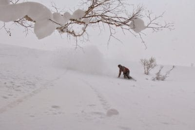 sport, adventure, snow, winter, cold, frozen, ice, landscape, dog, forest