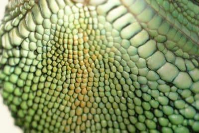 textura, serpiente, patrón, naturaleza, reptiles, Zoología, camuflaje, verde