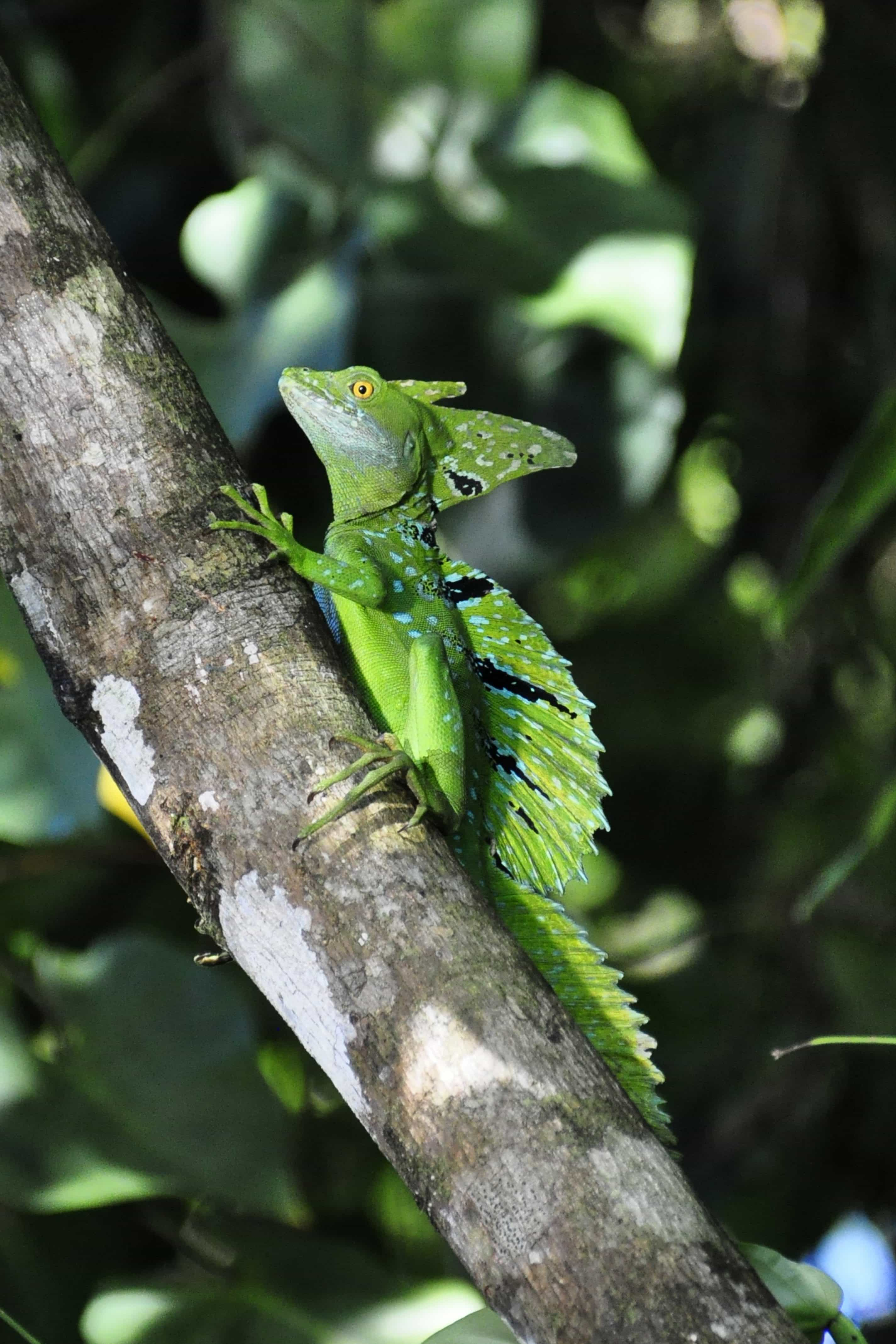 Free Picture Reptile Lizard Tree Zoology Camouflage