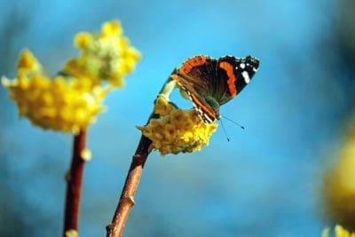 mariposa, naturaleza, insecto, flor, invertebrados, flora y fauna, verano, animal