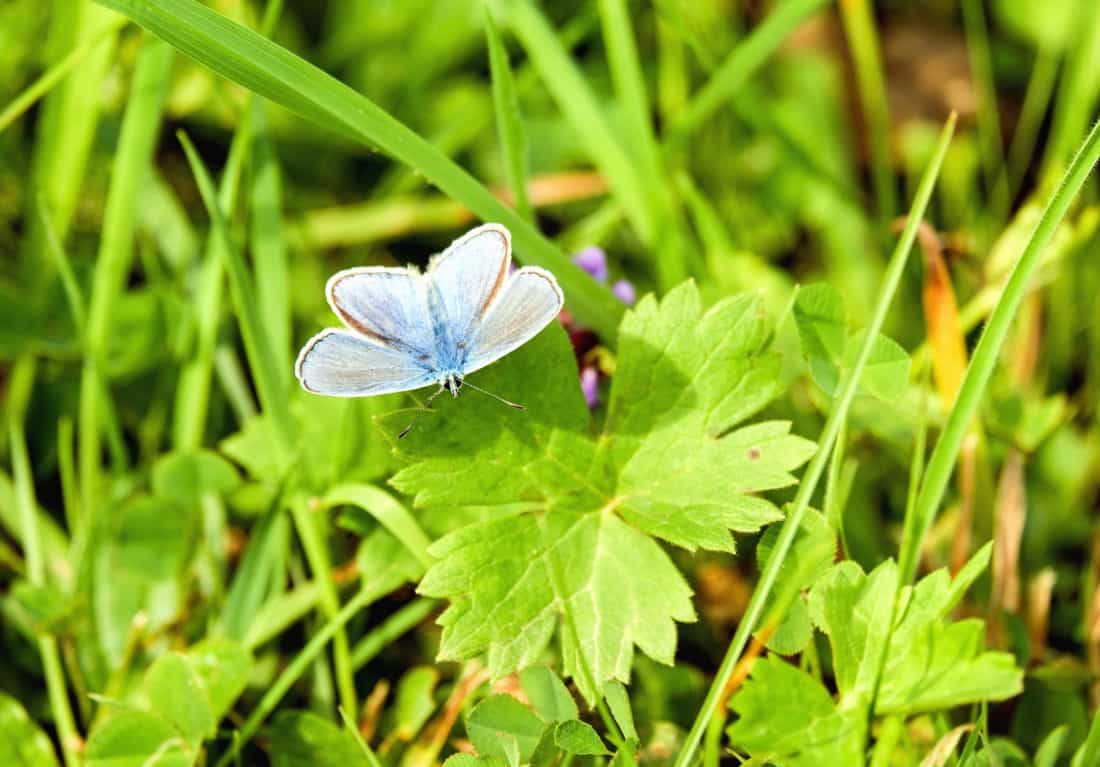 Natur, Rasen, Sommer, Flora, Umwelt, Blatt, Schmetterling, Garten, Insekten, Ökologie
