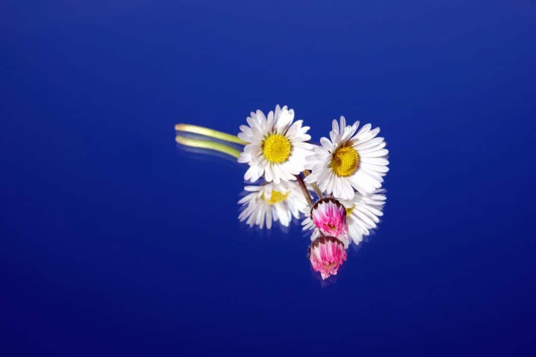 nature, flower, flora, summer, petal, garden, plant, flower