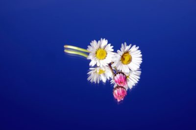 Natur, Blumen, Flora, Sommer, Blütenblatt, Garten, Pflanze, Blume