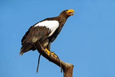 Vogel, Tierwelt, Natur, Wild, Tier, Schnabel, Federn, Himmel