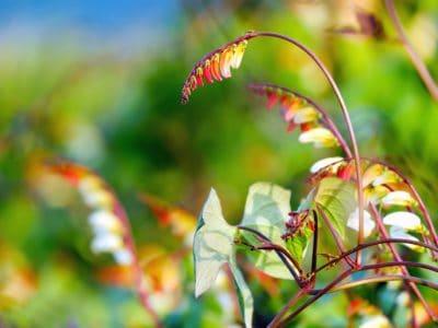 nature, leaf, flora, summer, garden, grass, flower, beautiful