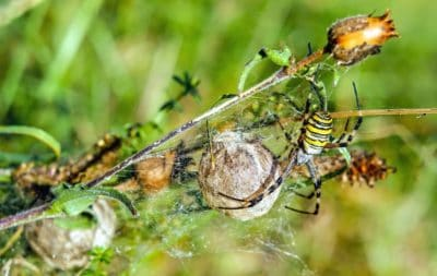 grass, thistle, flora, insect, spider, arthropod, animal, leaf, summer, nature