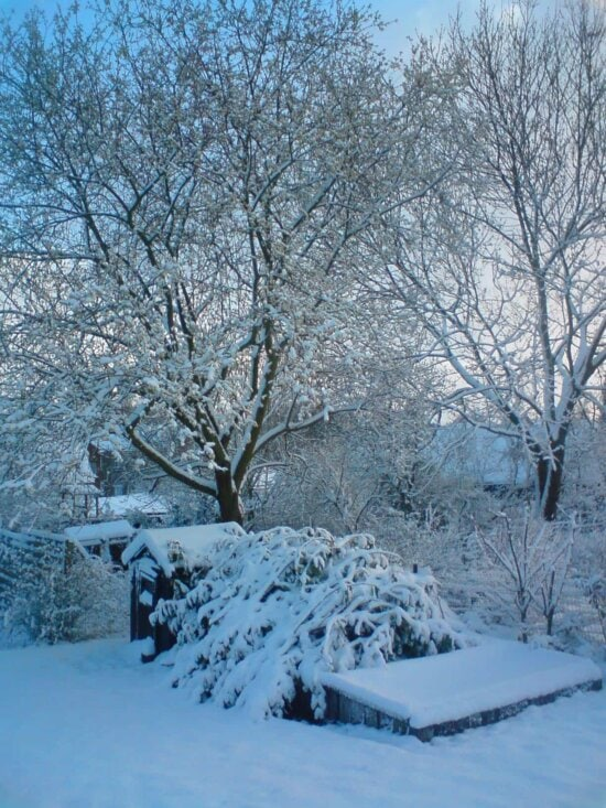 winter, snow, frost, cold, frozen, ice, outdoor, tree, snowstorm, winter