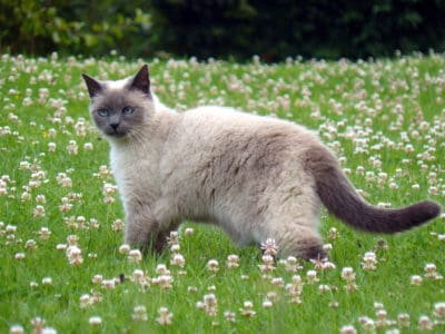 gras, natuur, leuk, buiten, dier, kat, gras, katachtige, kitten