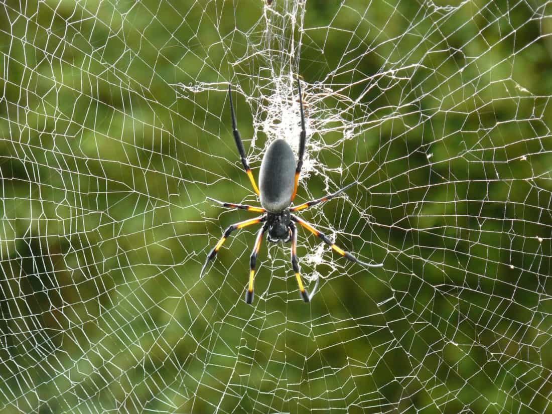 แมงมุม ใยแมงมุม กับดัก ค็อบเว็บอินเตอร์ แมลง อันตราย หวาดกลัว
