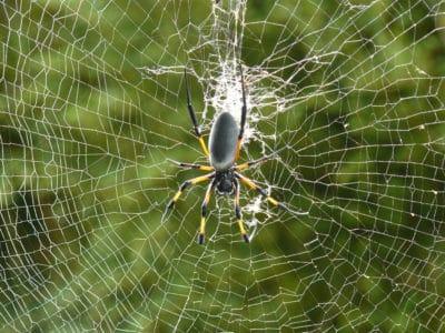 pavouk, pavučina, past, pavučina, hmyz, nebezpečí, fobie
