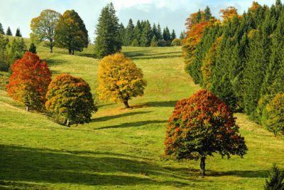 tree, landscape, nature, leaf, hill, field, grass, autumn