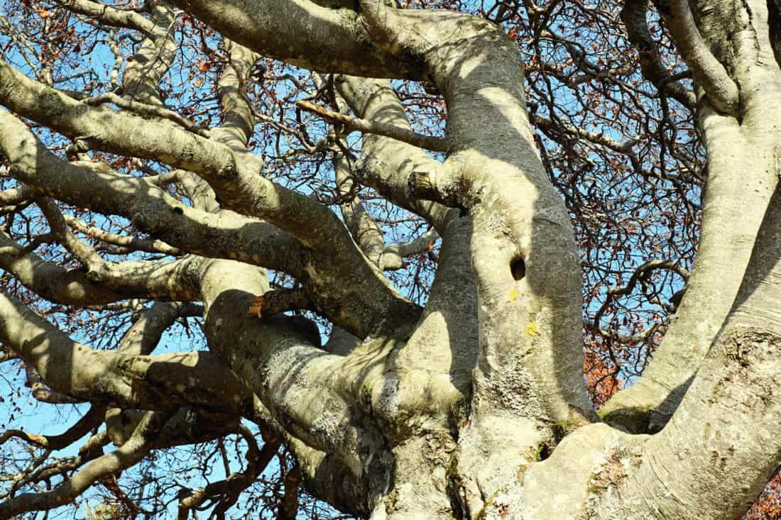stabla, grane, prirode, drvo, kora, šuma, biljka na otvorenom,