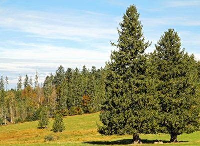 arbre, paysage, nature, herbe, colline, pré, été, forêt