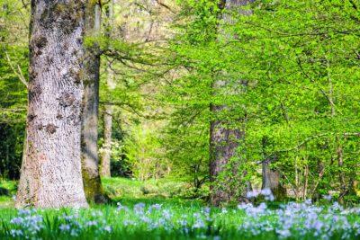 wood, nature, landscape, leaf, grass, flora, forest, plant