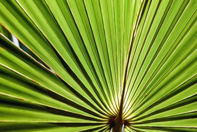 leaf, palm, summer, flora, nature, exotic, plant