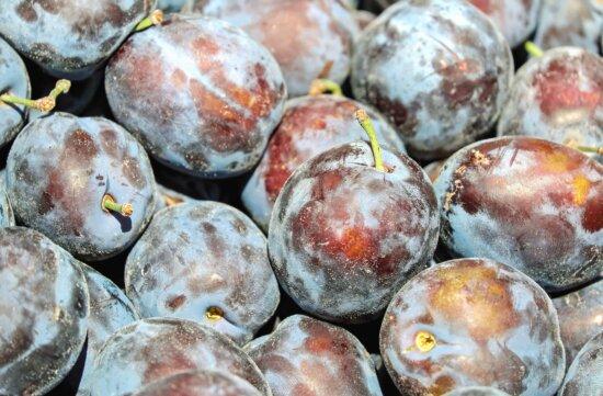 plum, fruit, food, organic, nutrition, blue, macro