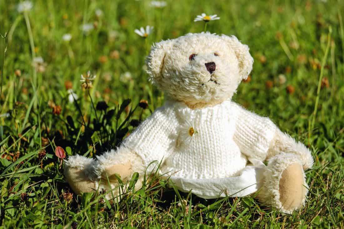 잔디 필드, 자연, 귀여운, 테 디 베어, 장난감, 야외, 공장
