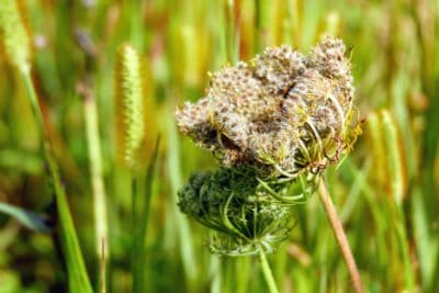 nature, flora, leaf, grass, summer, herb, grass, garden, meadow