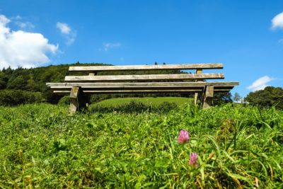 grass, meadow, bench, field, nature, landscape, outdoor
