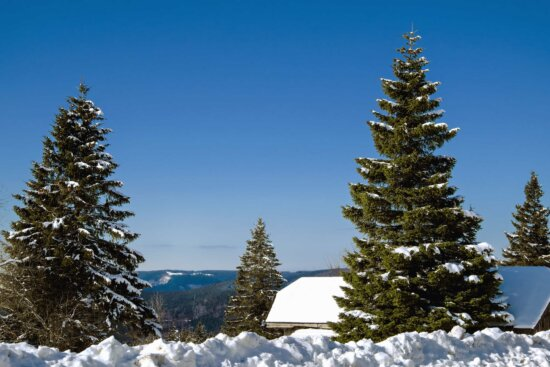 snow, winter, tree, evergreen, cold, conifer, frost, day, sky