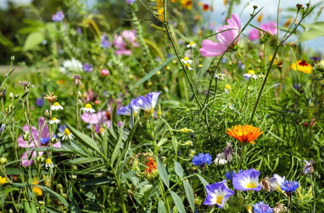 ธรรมชาติ ดอกไม้ ฤดูร้อน ทุ่งหญ้า หญ้า พืช สวน ฟิลด์