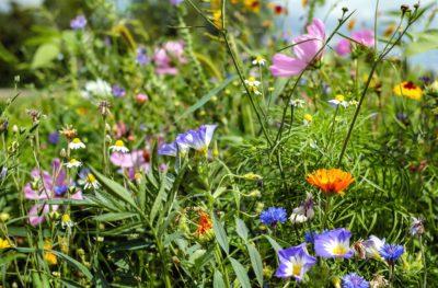 prirode, cvijet, ljeto, livada, trava, flore, polje, vrt
