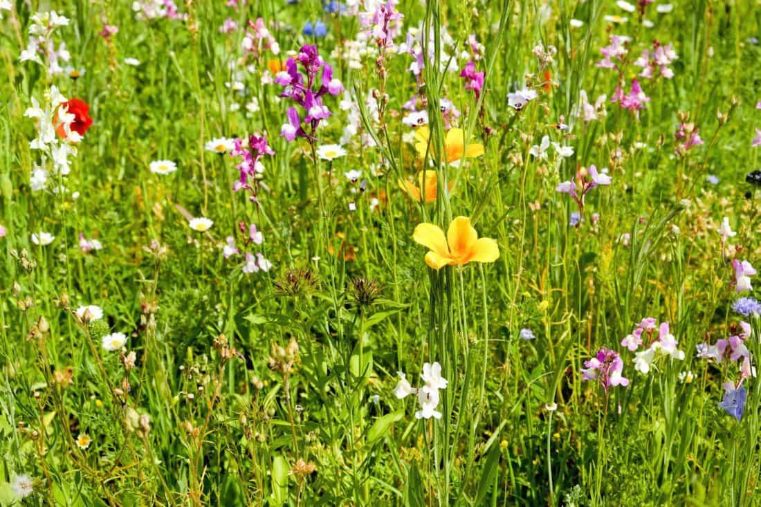 этот травы которые растут на лугу фото материал будет меньше