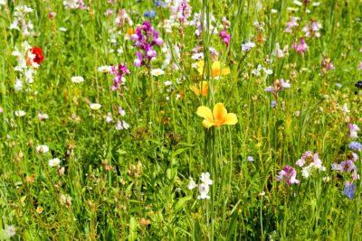 cvijet, priroda, trava, ljeto, flore, polje, biljka, biljka, livada