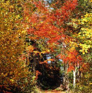 listy, příroda, lesní cesta, strom, krajina, dřevo, větve, podzimní