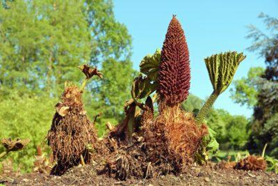 plant, tree, sky, grass, branch, leaf, vegetation