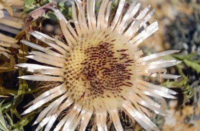 nature, plant, flower, petal, garden, flora
