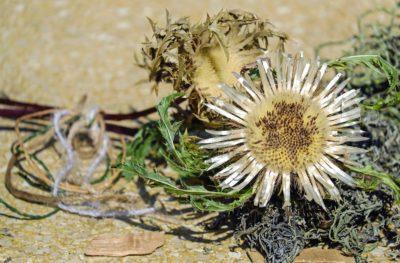ธรรมชาติ พืช ดอกไม้ ฤดูร้อน ใบ สมุนไพร ฟิลด์ ดอกไม้ กลีบดอก