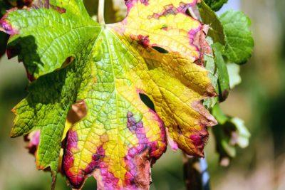 листа, природа, флора, градински, колоритен, дърво, растение, листа, есен