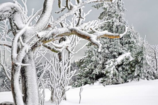 winter, frost, snow, frozen, cold, ice,  plant, tree, wood, branch