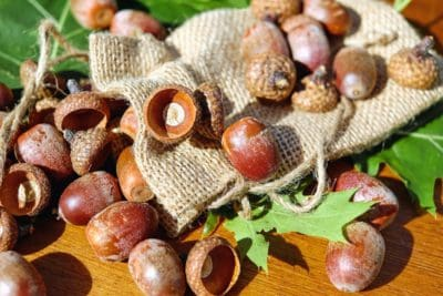 acorn, shell, wood, seed, fabric, autumn, leaf