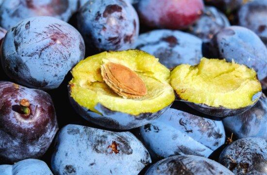 food, blue plum, diet, macro, seed, tasty, fruit