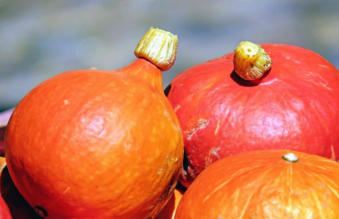 food, pumpkin, vegetable, autumn, macro, herb