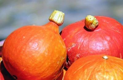alimentos, calabaza, verduras, otoño, macro, hierba