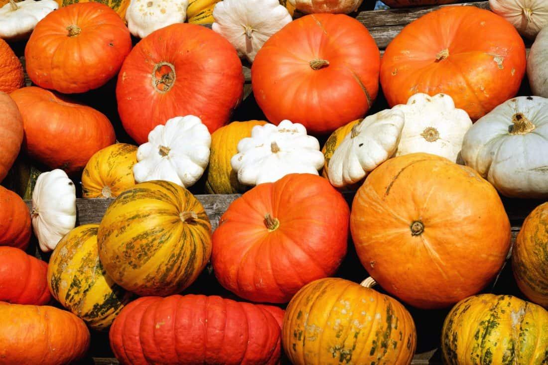 potiron, légume, gourde, automne, ferme, agriculture