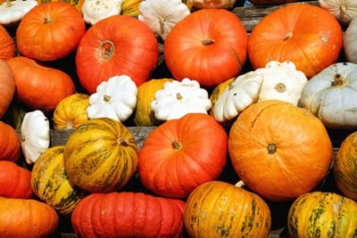 pumpkin, vegetable, gourd, autumn, farm, agriculture