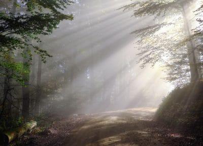 foresta, sole, strada, albero, paesaggio, natura, foglia, legno