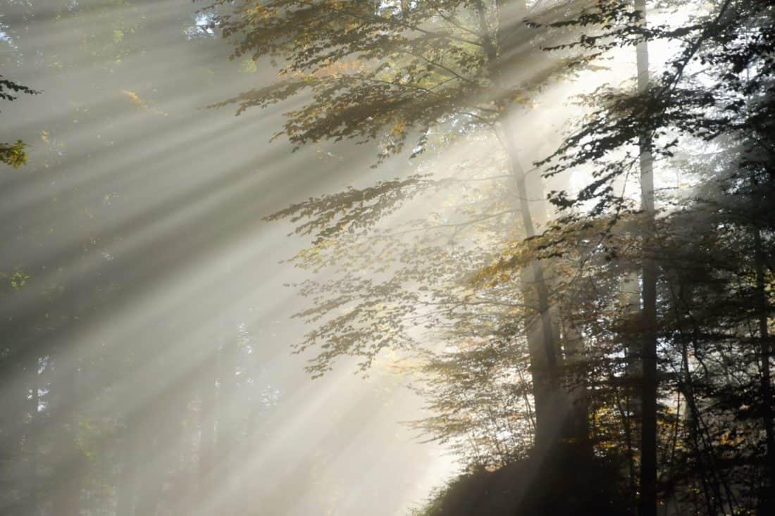 bosque, sol, día, rama, niebla, naturaleza, hierba, madera